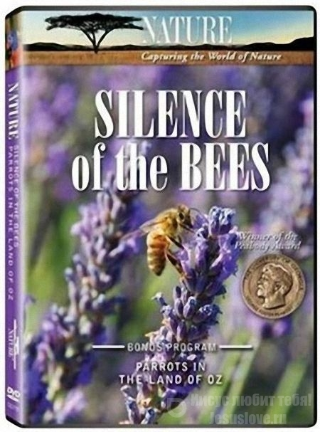 Молчание пчел | Silence of the Bees (2007)